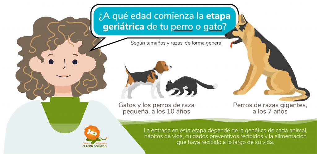 Etapa geriátrica en perros y gatos